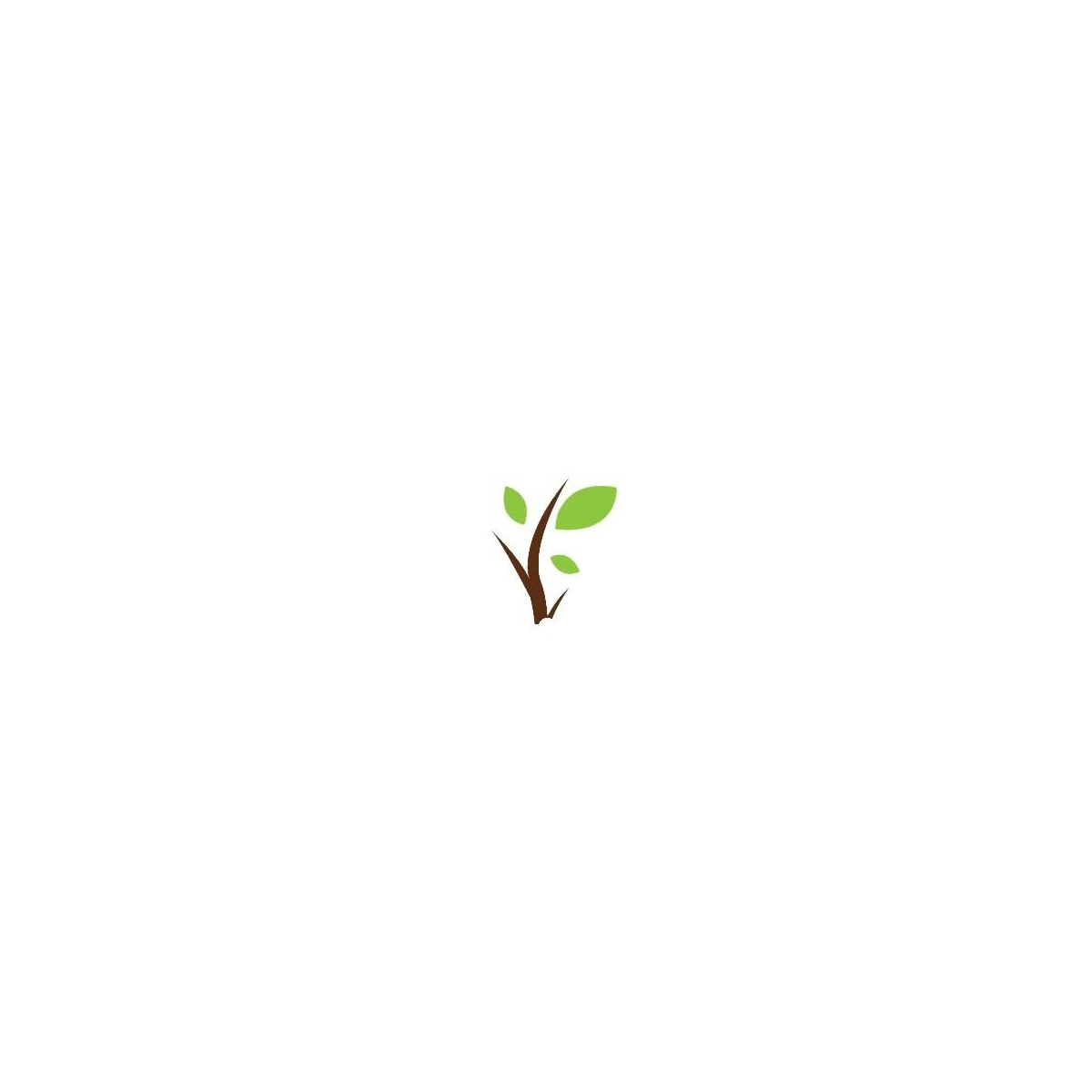 Curcuma en poudre 50g
