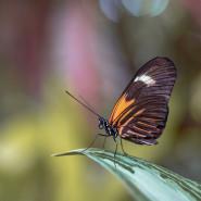 Fragrance Comme un papillon