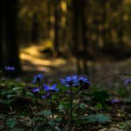 Fragrance Naturelle Bois fleuri ambré