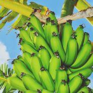 Fragrance Naturelle Banane